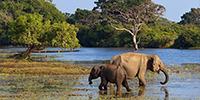 Elephant At Yala National Park
